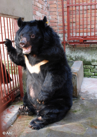 Named for his love of Gummy Bears :)
